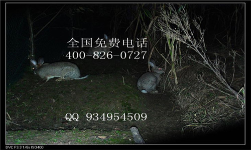 哪里有杂交野兔野外放养场基地可以考察