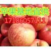 17186057111优质红富士苹果基地新报价