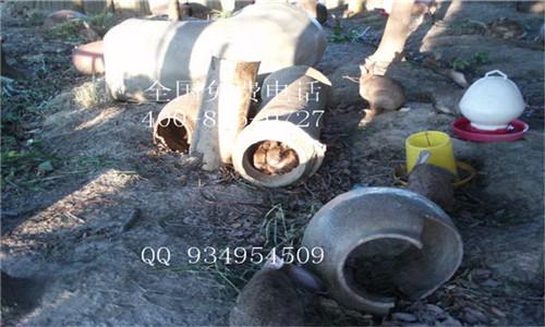 大型散养杂交野兔养殖场