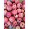 山东万亩苹果种植园红富士批发