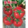 宏帅518_以色列进口西红柿种子时时更新批发价格,优质番茄种子