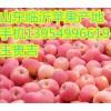 13954996619供应苹果山东红富士苹果临沂苹果