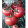 """优质番茄种子 荷兰""""冠晨368番茄种子""""高产"""