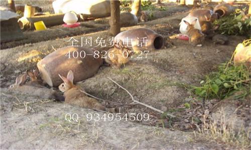 四川贵州野兔养殖基地