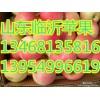 13954996619诚信苹果山东红富士苹果产地
