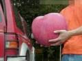 世界最大的苹果,广东水果,水果