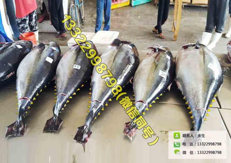 广东深圳供应蓝鳍大目金枪鱼