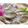 河南去头鲳鱼片_销量好的去头鲳鱼片经销商