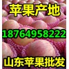 【18764958222】地面红富士苹果批发山东冷库苹果价格