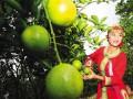 海南琼中绿橙味美 价格再创新高