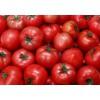 供应西红柿