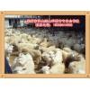 承山绒山羊繁育专业合作社出售专业的绒山羊_绒山羊公羔批发价格品牌好