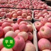 山东红富士苹果大量批发