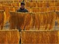 河南内黄县:春节到 粉条俏 (3)