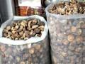 巴基斯坦:2016年食用菌出口量20.1万公斤 货值129.3万美元