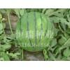 西瓜种子批发价格——要买优质西瓜种子就到恒瑞种业