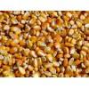 民发养殖场常年大量收购玉米大豆高粱小麦等饲料原料