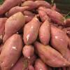 来福红薯价格红皮黄心的红香蕉红薯批发