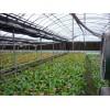 高品质温室蔬菜大棚,环保优质,价格优-万红温室