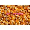 长期求购玉米豆粕高粱菜粕
