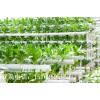 温室大棚结构简介-温室大棚