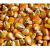 长期大量收购玉米碎米大豆高粱等饲料