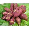 优质紫薯红薯,量大从优,山东购销基地17863386688
