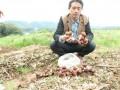 村主任试种大球盖菇替村民趟致富路