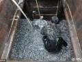 山东青岛渔民渔获丰收 日上岸十几万斤 (2)