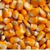 ★长期采购:玉米小麦次粉麸皮高粱DDGS等各种饲料原料
