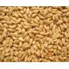 饲料厂大量求购玉米小麦饲料小麦高粱木薯淀粉碎米等