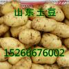 今日土豆价格行情荷兰十五土豆价格行情