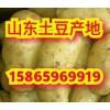 山东荷兰土豆批发价格