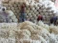 江苏海安:蚕茧产业助农增收 (2)