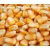 襄阳傲农饲料常年现款求购玉米小麦大豆菜粕等饲料原料