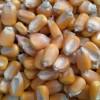 饲料厂求购菜饼 玉米 高粱 麸皮 棉粕