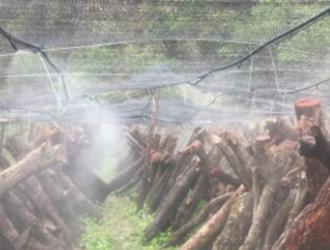 四川雅江县木耳种植基地全自动灌溉系统安装完成