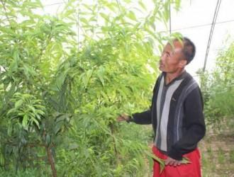 甘泉一男子身残志坚 种植大棚蔬菜成致富带头人
