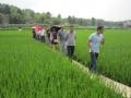 成都市种子管理站检查简阳市农作物新品种展示示范工作