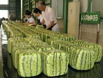 郴日本特产方形西瓜上市 标价超过90美元