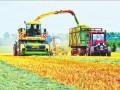 黑龙江垦区长水河农场引进优质饲料