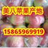 美八苹果价格详情 美八苹果产地价格行情