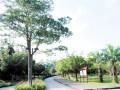 广东江门鹤山市共和镇打造江门近郊生态休闲旅游体验中心