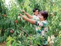 和庄镇:大力发展绿色农产品 农民走上致富路