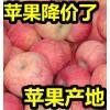 山东红星苹果价格便宜/红将军/红富士苹果产地批发