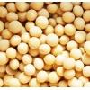 现款求购大豆、玉米、小麦、高粱、大米等酿酒原料