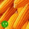 现金求购玉米麸皮大豆高粱菜饼等原料