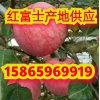 今天红富士苹果多少钱一斤 膜袋红富士苹果产地价格