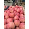 红富士苹果哪里的价格便宜