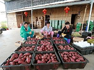 让特色产业扬起龙头——海南儋州海头镇发展王牌农业综述 (2)